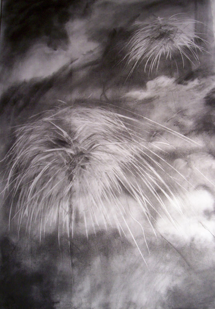 detail, epifitas, airplants; graphite; 2' x 3' / Nancy Cusack